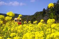 菜の花列車2020-04-14更新 - 夕陽に魅せられて・・・