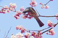 ヒヨちゃん2020-04-17更新 - 夕陽に魅せられて・・・