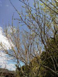 天気の良い日曜。 - Yoshinago8's Blog