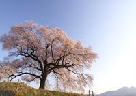 わに塚の桜3 - Patrappi annex