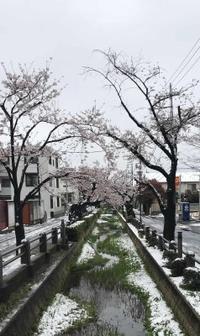 """桜+積雪 - """"まちに出た、建築家たち。""""ーNPO法人家づくりの会"""