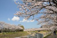 川沿いのお散歩 - むーちゃんパパのブログ4