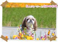 2020年2月22日田んぼをつかった花畑@伊豆旅行 - 週末は、愛犬モモと永吉、拓海とお出かけ!Kimi's Eye