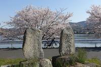 免許更新&桜ライドwith E-bike - Bicycle Touring Photo Gallery.