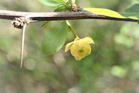 木の花 - 里山の四季