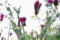 木蓮と桜 - 生きる。撮る。