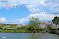 春奈良県五條市上野公園-九品寺 - 日本全国くるま旅