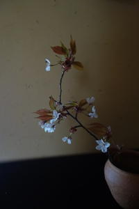 山桜の美しさ - g's style day by day ー京都嵐山から、季節を楽しむ日々をお届けしますー
