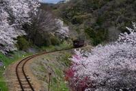季節の花と列車とその1 - 季節の映ろひ