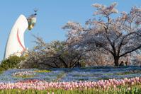 チューリップ、ネモフィラ、桜、太陽の塔 - one day, one photo