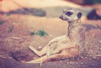 観察週間の(ぉ)すすめ♪ - ◎shanti animals shanti planet◎自然に在るものと共にヒトと動物へセラピー&ヒーリング