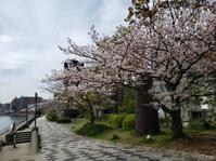 桜も頑張ってる🌸 - sallyka
