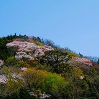 桜は景勝地だけにあらず - Photo Break