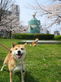 満開の笑顔 - yamatoのひとりごと