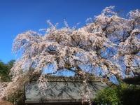 桜 10奈良県 - ty4834 四季の写真Ⅱ
