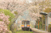 春の楽しさ - PTT+.