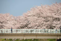 のんびりお散歩 - むーちゃんパパのブログ4