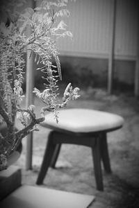 鉢植えの藤 - summicron