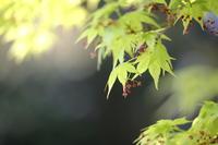 雨の日も、光の日も - ecocoro日和