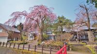 千手院の枝垂れ桜② - 浦佐地域づくり協議会のブログ