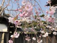 春うらら外でお昼ご飯 - 島暮らしのケセラセラ