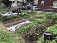 北陸でも新型コロナが増加中 - 家庭菜園ニストabuさん家の美味あれこれ