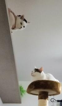 飛び降り - 素人木工雑貨と犬猫日記