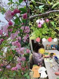 満開の桜&プライベートレッスンと【お知らせ】です - *マウオリオリ* リボンレイ~Happy♪ Joyful♪ Thankful !!