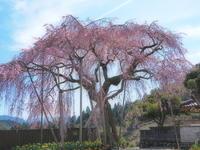 桜 11奈良県 - ty4834 四季の写真Ⅱ