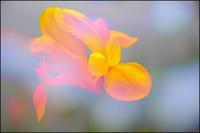 彩リ - 薫の時の記憶
