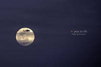 Super moon - + Spice to life