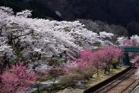 季節の花と列車とその2 - 季節の映ろひ