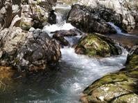 早春の渓流釣行 - 瀬戸内で遊ぶ