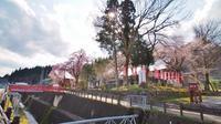 千手院の枝垂れ桜③ - 浦佐地域づくり協議会のブログ