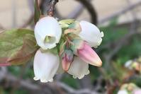 花に癒される日々 - ひとり言