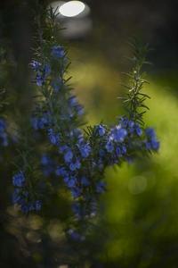 小さな花たち - たなぼた