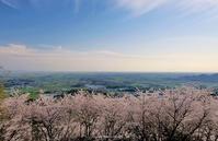 吉野ヶ里町の桜の森 - A  B  C