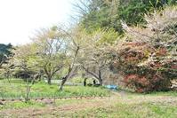 カブトムシうじゃうじゃ - 千葉県いすみ環境と文化のさとセンター