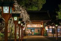 2020京都桜~平野神社ライトアップ - 鏡花水月