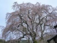 桜 12奈良県 - ty4834 四季の写真Ⅱ