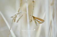 春の妖精に負けじと、両セセリ登場です。(2010/04/07) - 里山便り