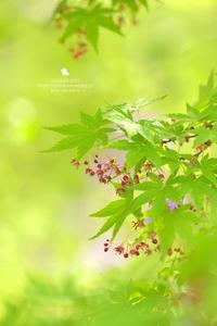 花盛り - お花びより