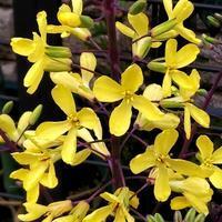 冬に植えた葉ボタンが花盛り・・・お詫びと訂正 - 健気に育つ植物たち