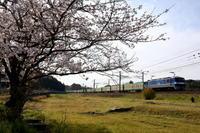 防府の桜2020年4月7日 - 鉄道日和