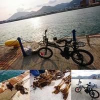 わかめ 自転車にグルグル - EVOLUTION