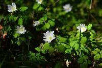 白い花 - 気ままな生き物撮り 弐