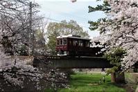 藤田八束の鉄道写真@桜の季節春爛漫の中阪急電車が走ります。阪急電車と夙川公園の桜 - 藤田八束の日記