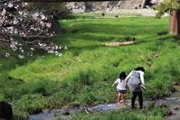 藤田八束の阪急電車写真@夙川公園の桜、そして阪急電車のコラボ写真展、夙川公園は春爛漫 - 藤田八束の日記