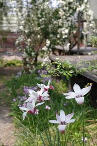 春爛漫 - お庭のおと