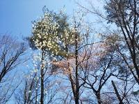 春爛漫の奥美濃・郡上で三角点踏査 - 山にでかける日